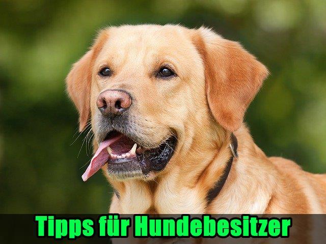 Tipps für Hundebesitzer